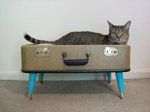 15 Cool DIY Cat Houses