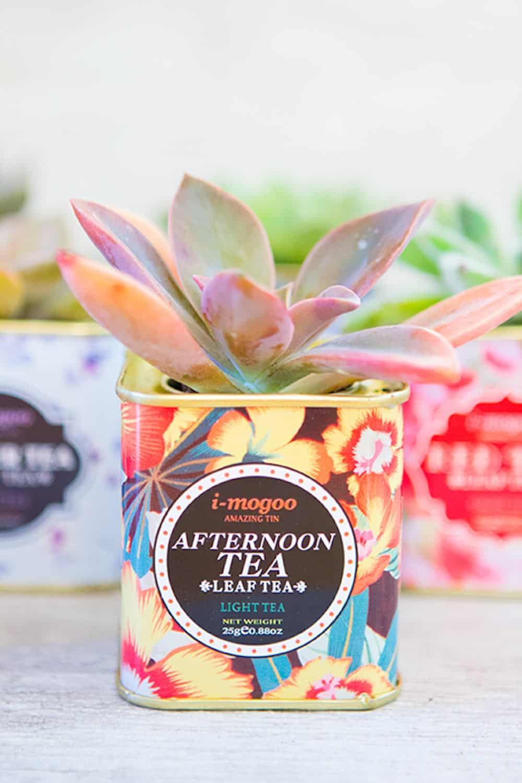 Diy tea tin planter