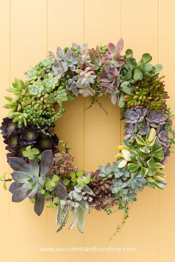 A succulent wreath on a yellow door