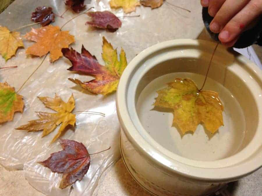 Diy waxed fall leaves