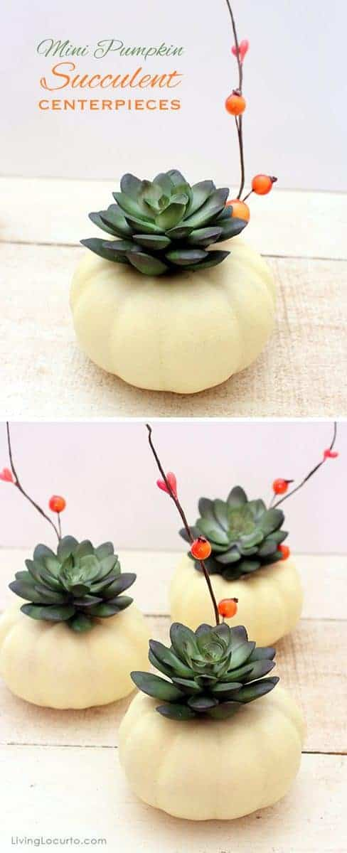 Mini pumpkin succulent centrepieces
