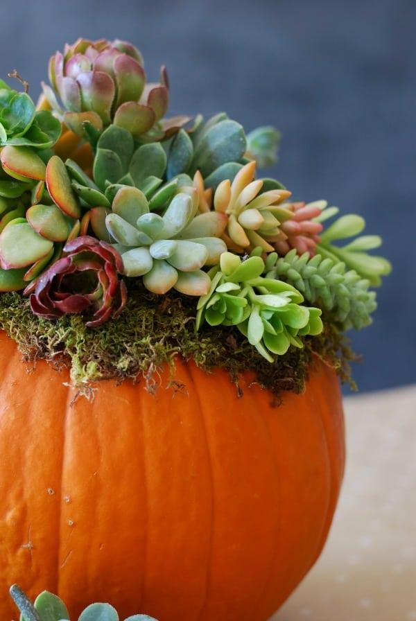 Pumpkin succulent harvest centrepiece