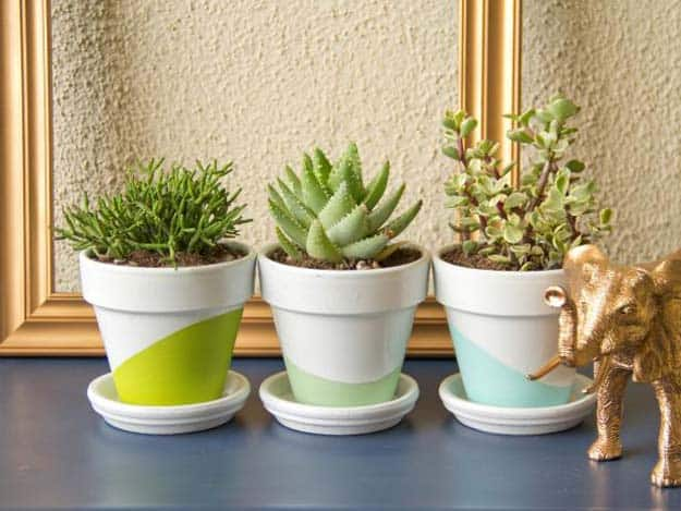 White painted and colour blocked succulent planters