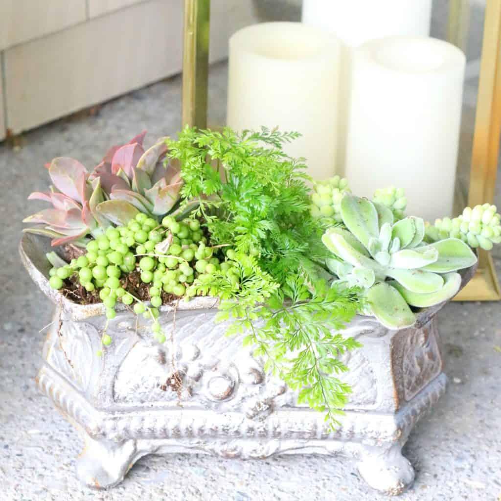 Front porch succulent medley bouquet