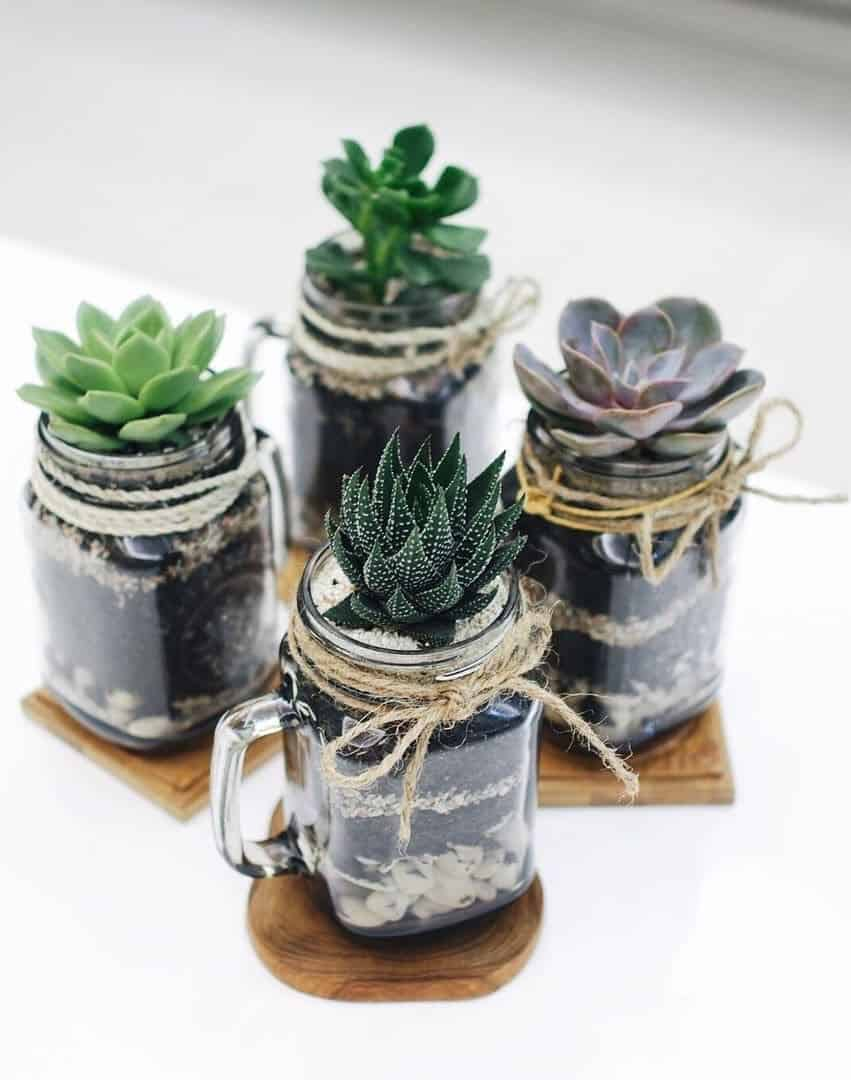 Mini mason jar succulent plants