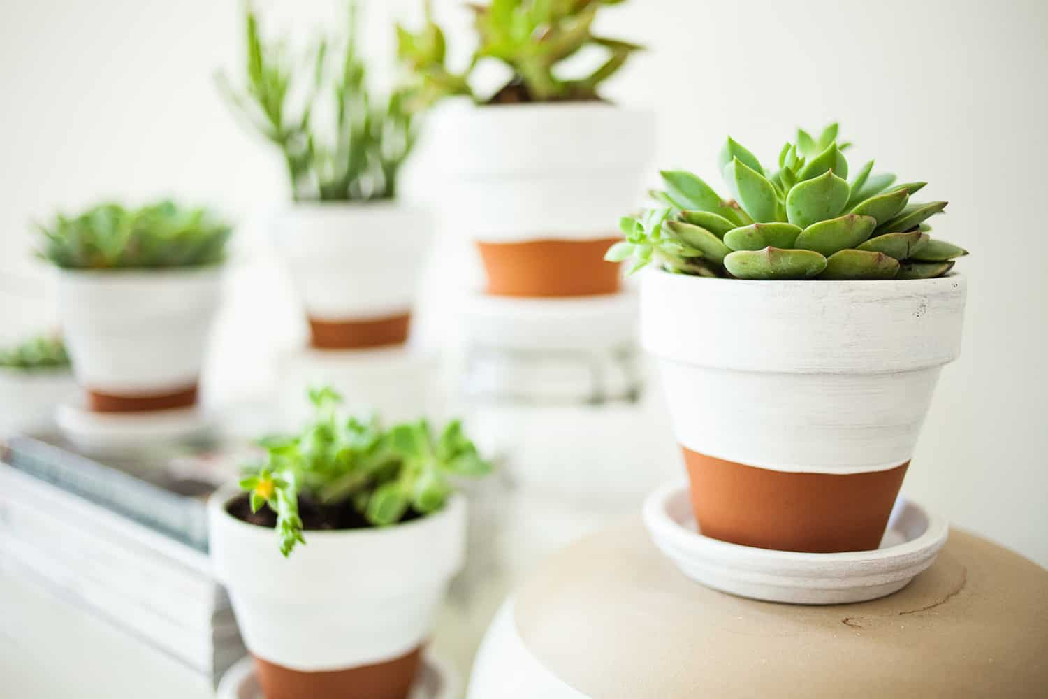 Painted pottery pots for succulents diy