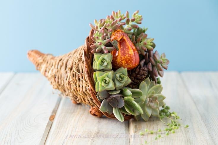 Succulent cornucopia