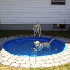 Diy in ground dog pool