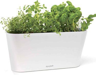 Aquaphoric herb garden tub
