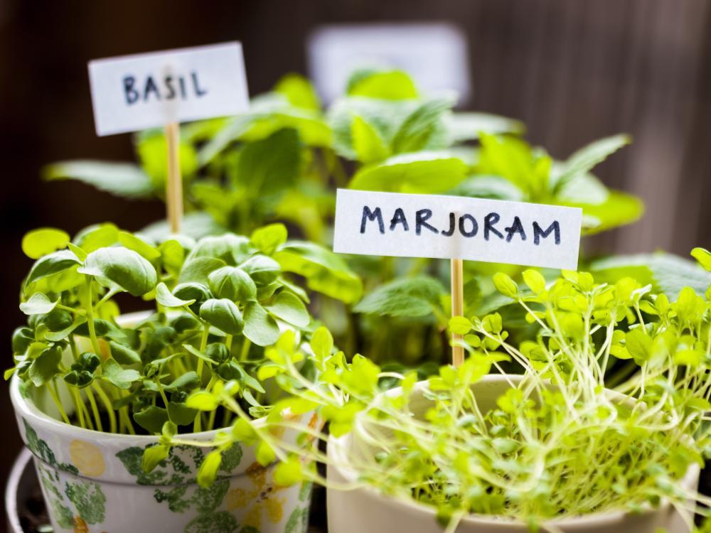 Best herb garden