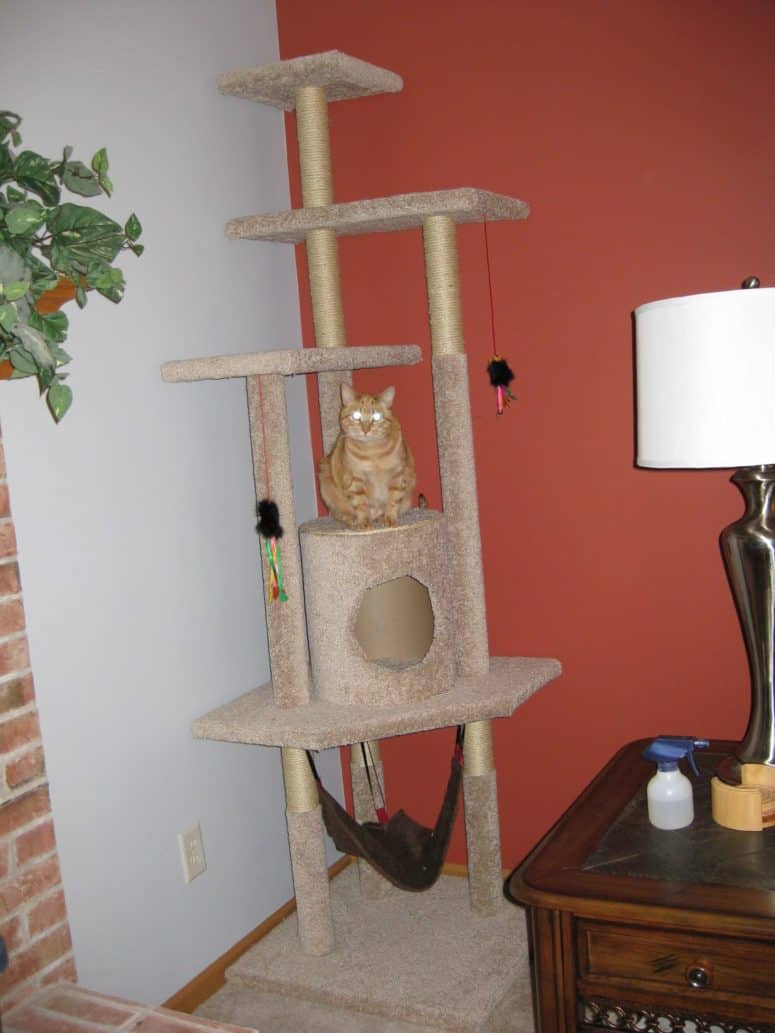 Carpet covered cat tree with a hammock