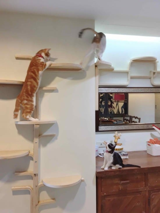 Cut and wall mounted stool cat tree