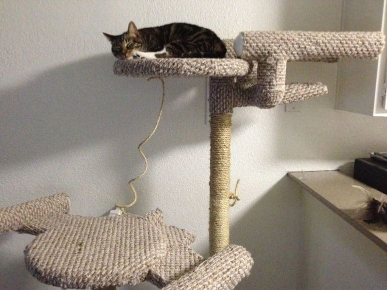 Diy star treck themed cat tree
