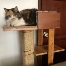 Diy cat tree with a water shelf