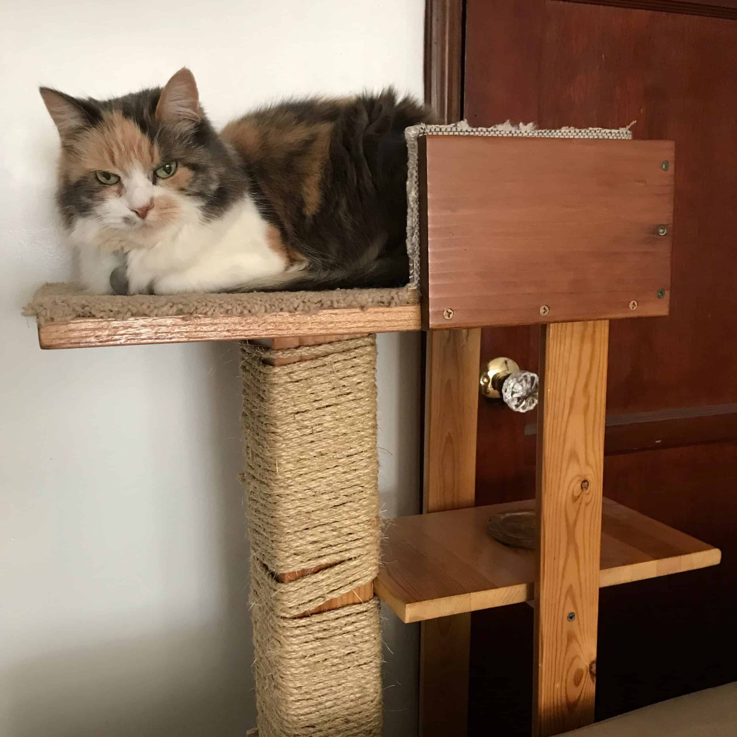 15 Diy Cat Trees How To Build A Tower