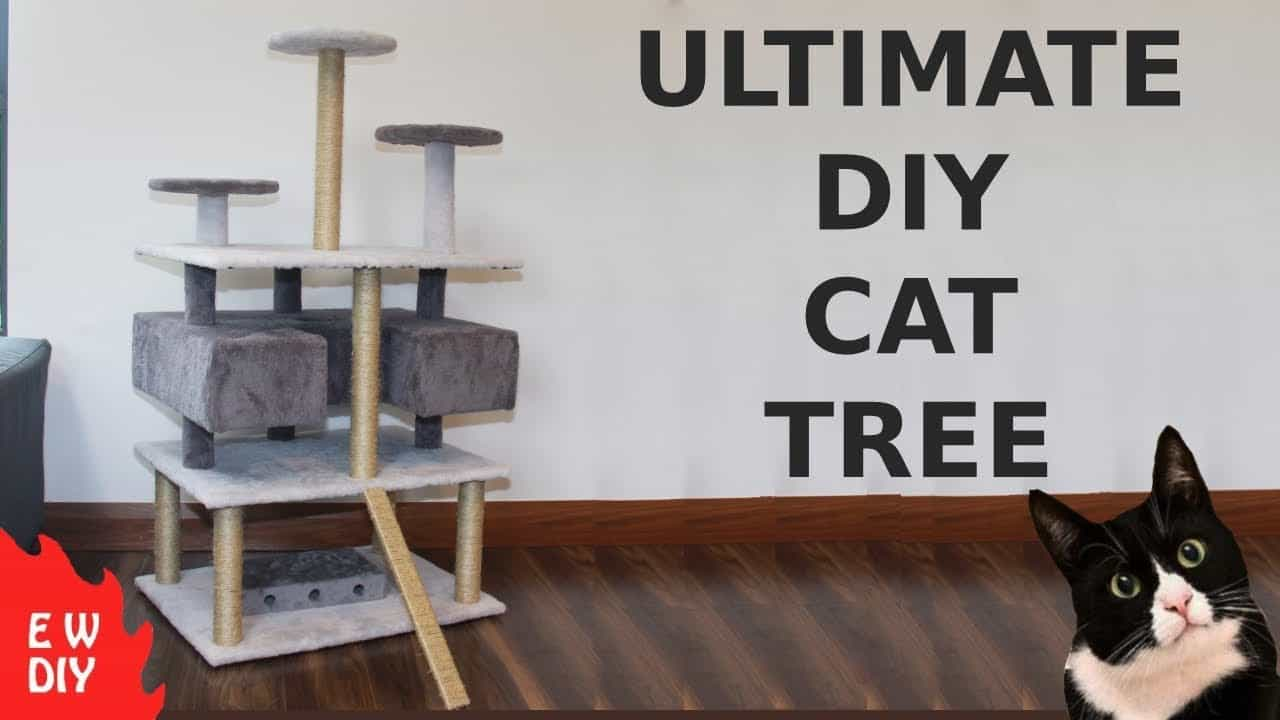 The ultimate dy cat tree