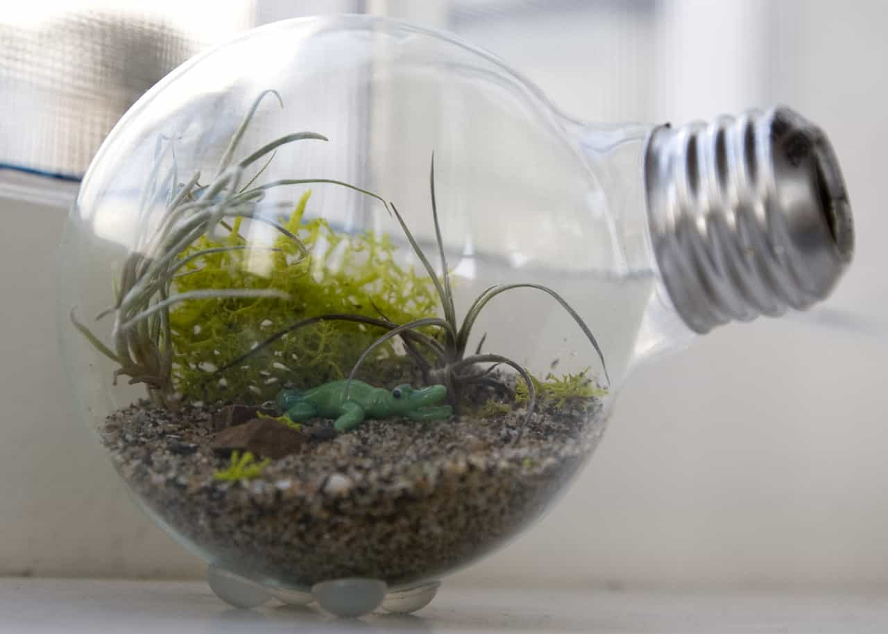 Light bulb diy terrarium
