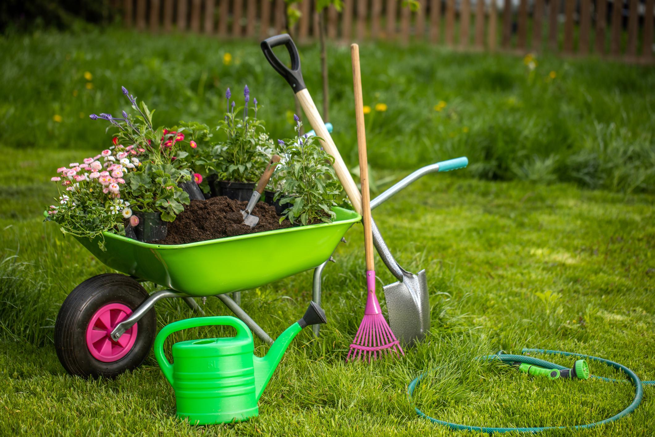 Plant Flowers in Old Wheelbarrows