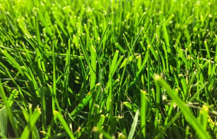 Green grass lawn close up 725 min