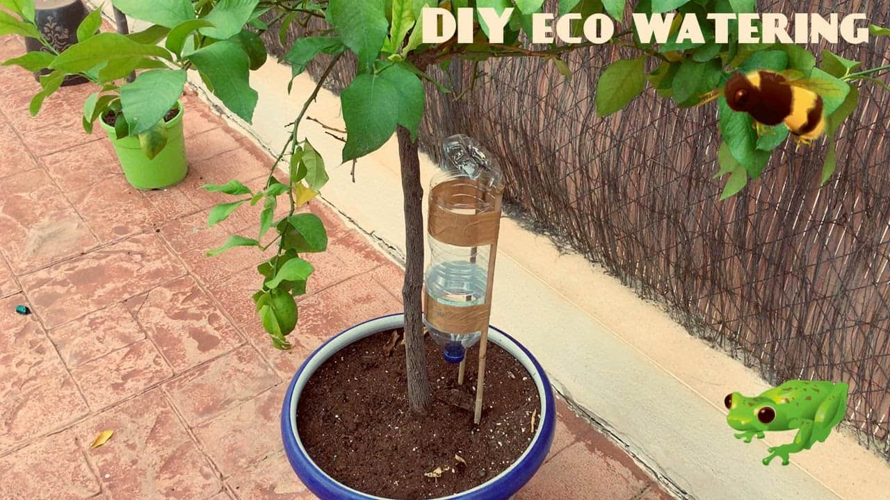 Diy self watering system for potted plants and trees