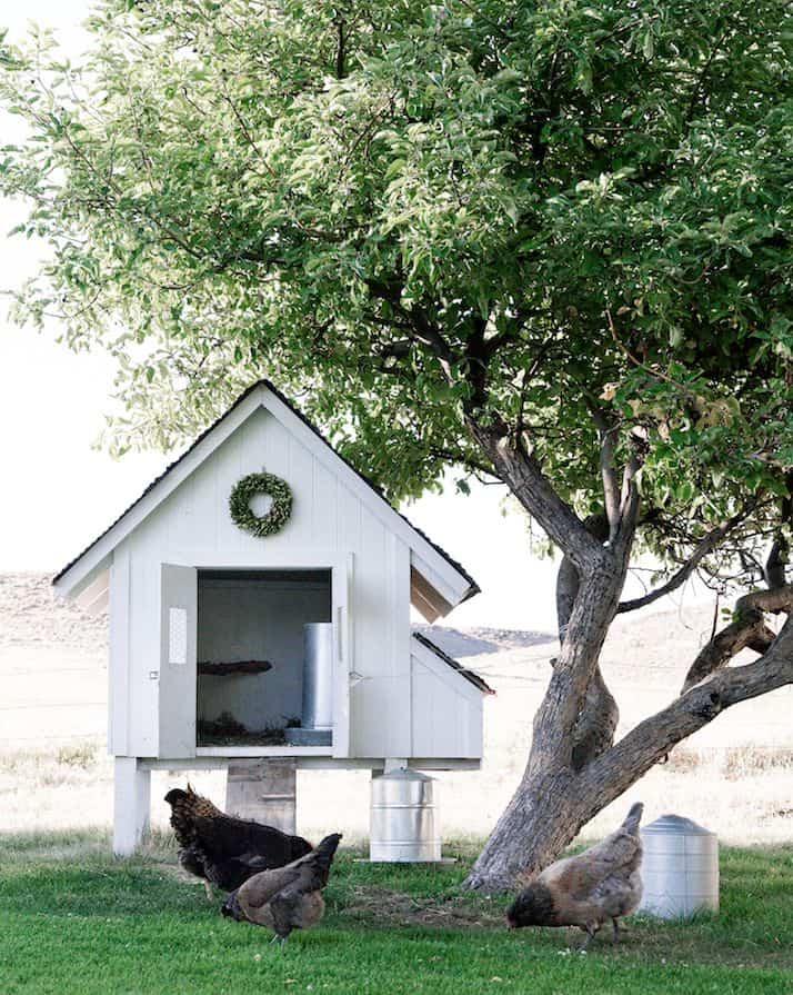 Small all white chicken coop cottage style