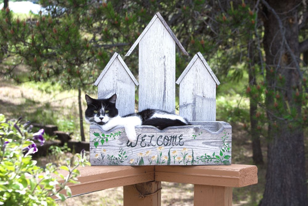 Welcome sign cat spot
