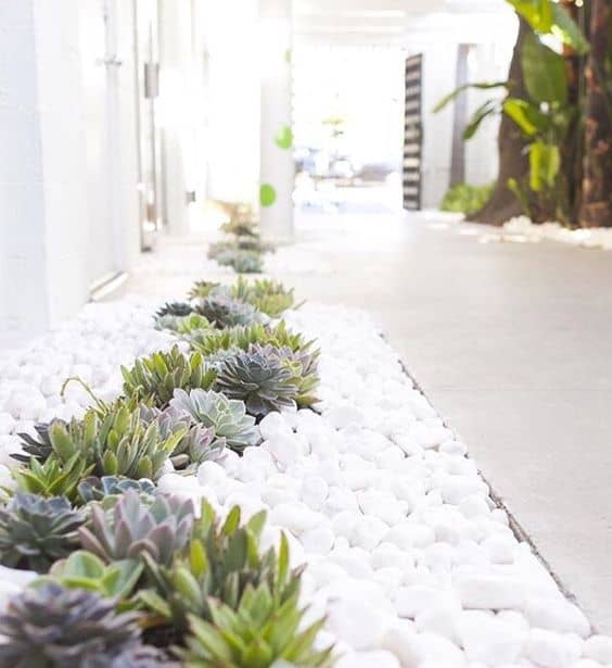 White pebbles with cute succulents look amazing