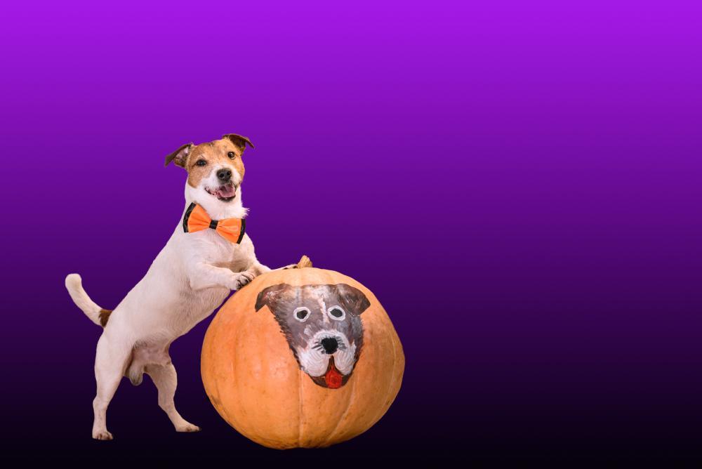 Cute pumpkin your pet