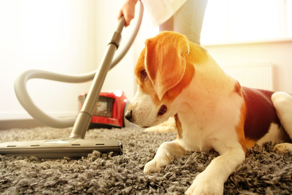 Best vacuum high pile carpets