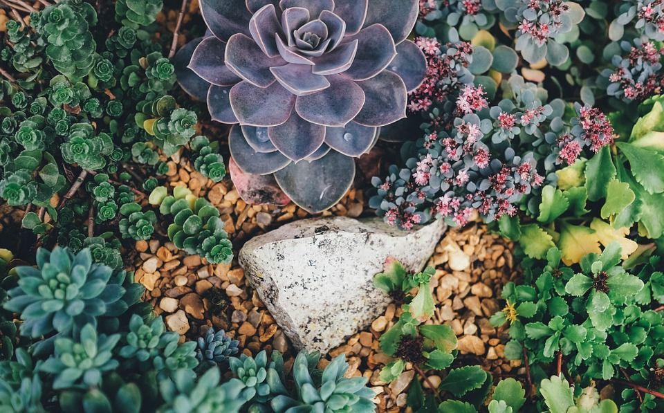 How much to water succulents