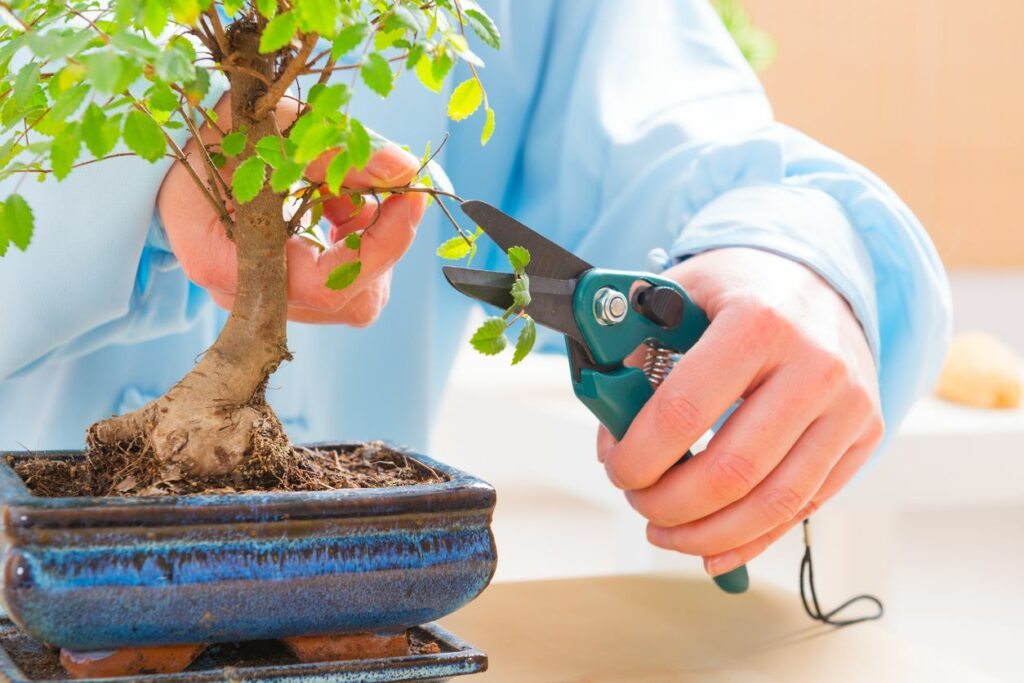 Bonsai Tree Grow Style And Care For Your First Bonsai Tree