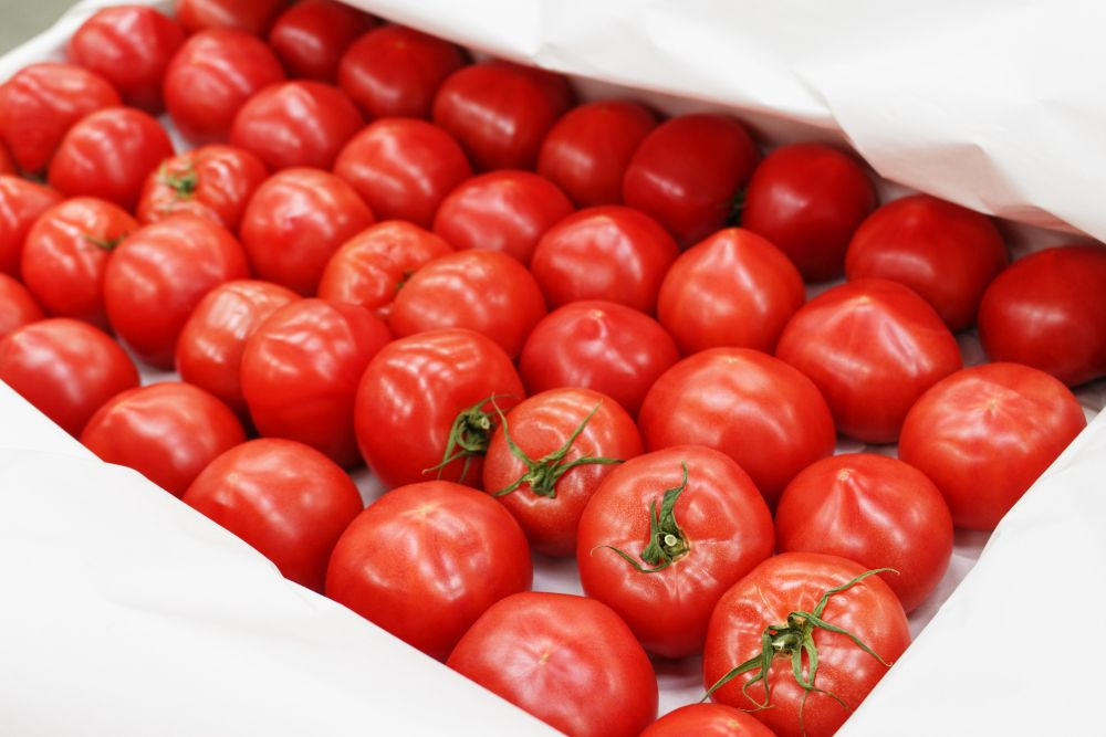Freeze fresh tomatoes on tray