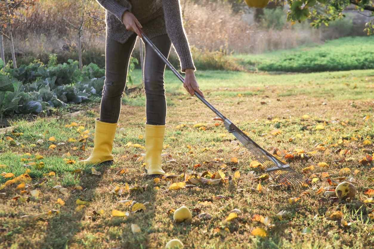 Садовые суеверия — истоки и достоверность садового фольклора и мифов