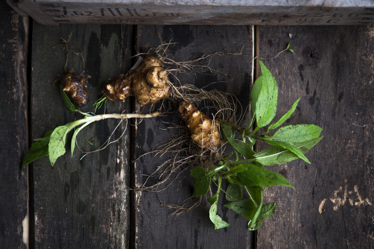 Ginger Plants Care