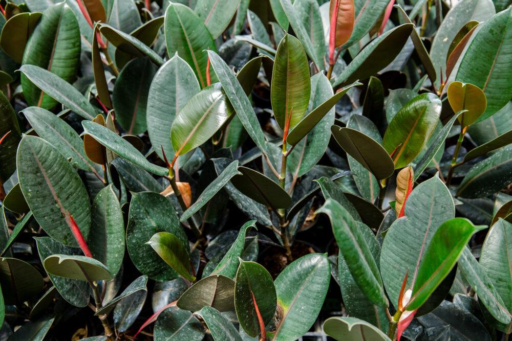 India, sweden, close up, houseplant, leaf