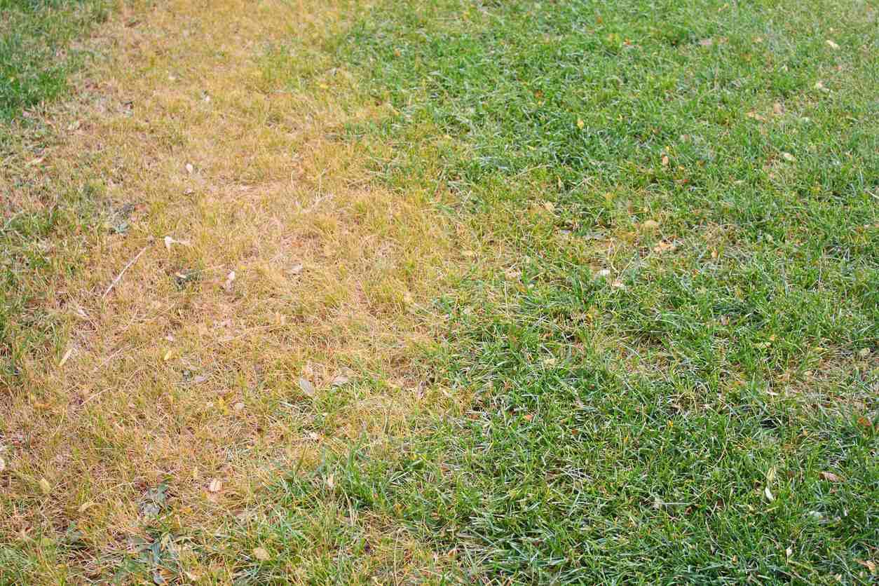 Проблемы с желтым газоном — как исправить желтый газон