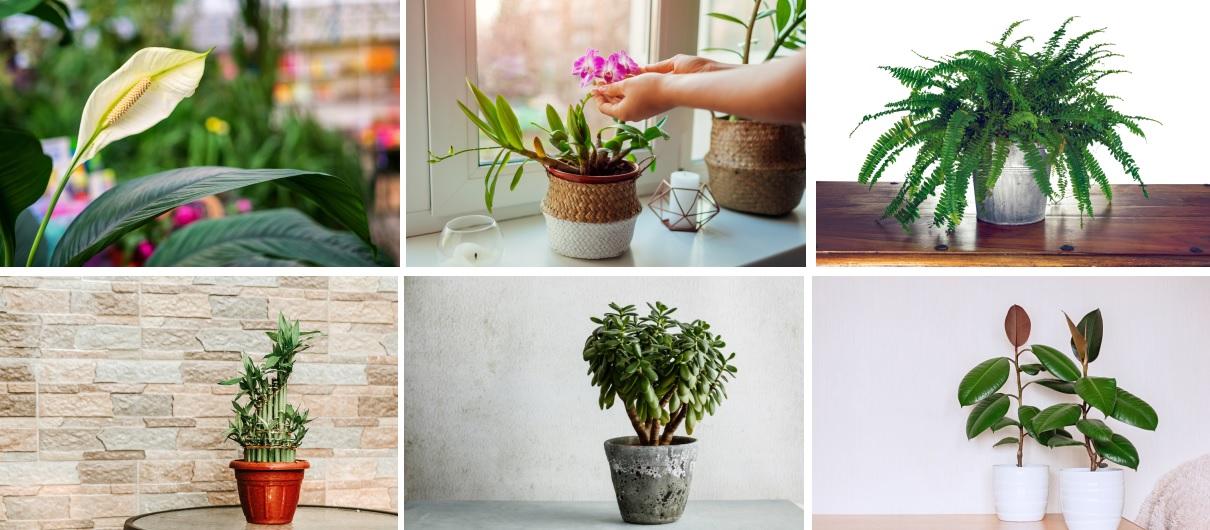 Счастливые растения, которые приносят процветание, здоровье и удачу