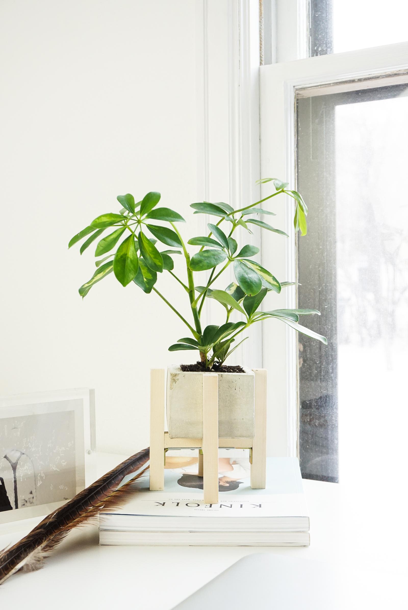 Concrete planter and stand
