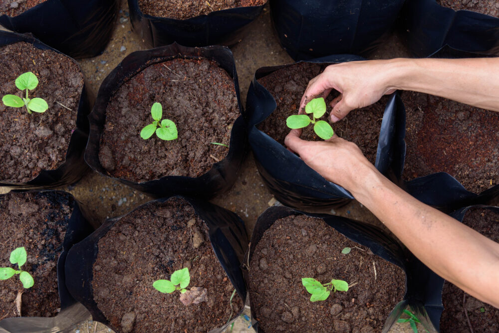 8 Best Grow Bags Reviews — Create A Garden Anywhere