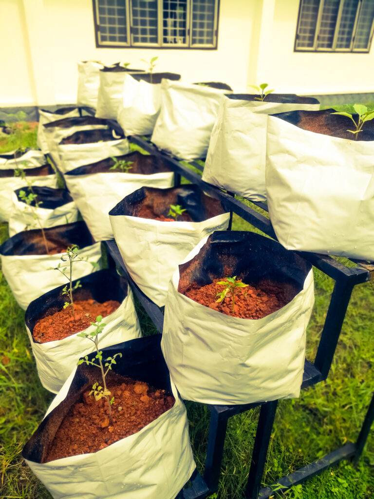 Grow bags with vegetable saplings in a vertical stand outside