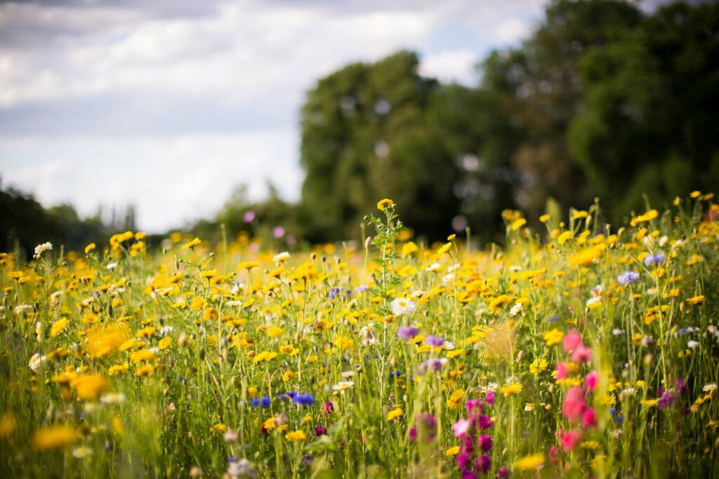How To Plant And Care For Wildflower Gardens