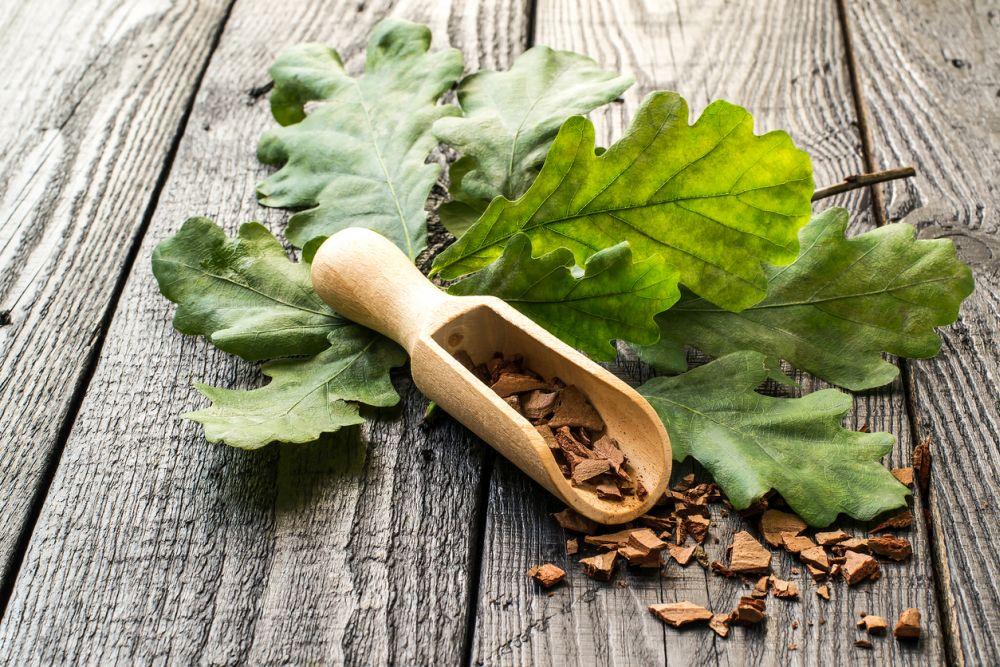 Oak branch and oak bark