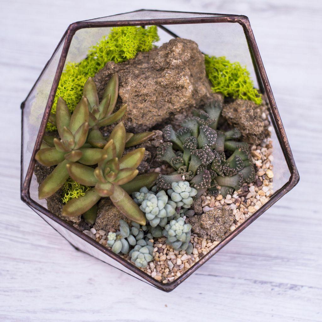 Succulents mini garden in glass vase