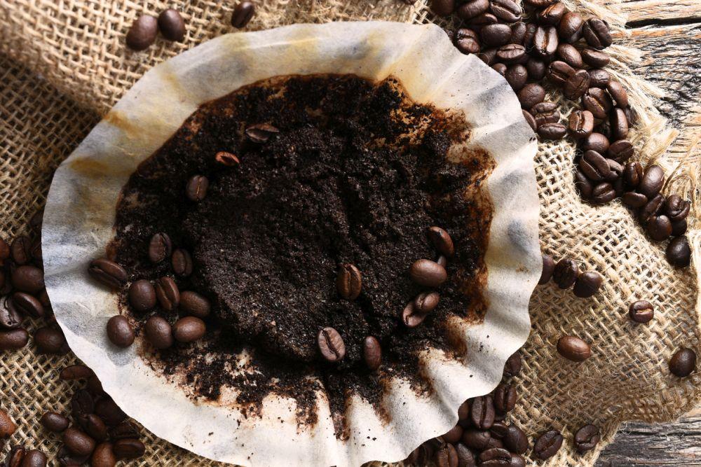 Coffee grounds tomato plant fertilizer