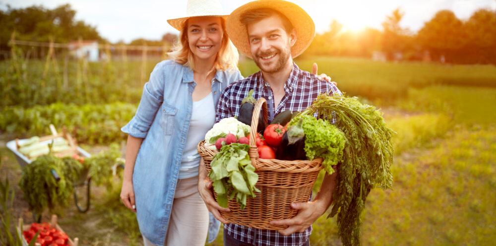Companion Vegetable Garden