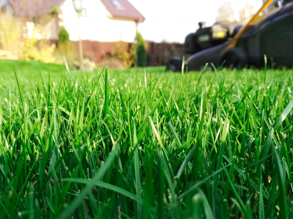 Lawn liming