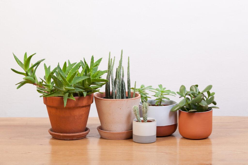 Succulents and various pots