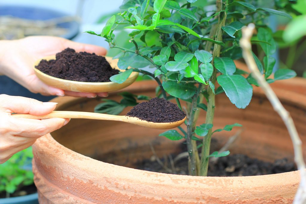 coffee grounds compost
