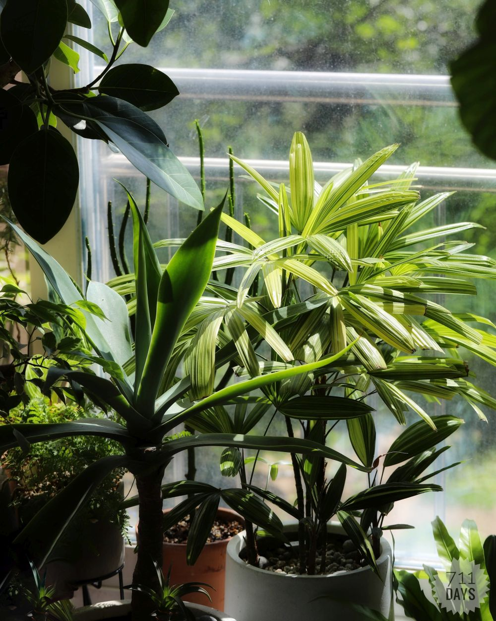 Green bamboo palm tree in a pot