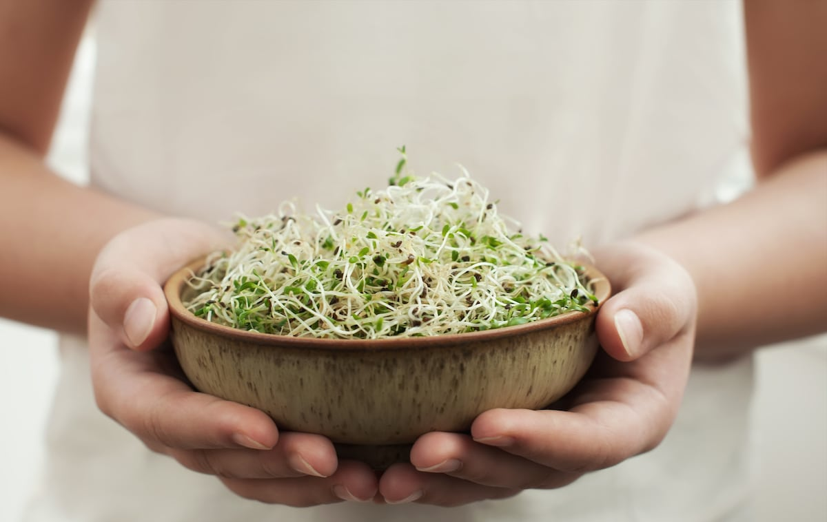 A picture of bean sprouts